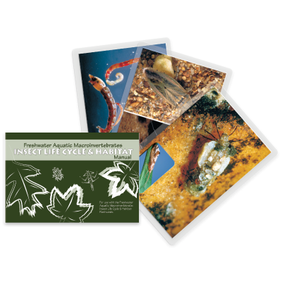 Aquatic Macroinvertebrate Life Cycle & Habitat Flashcards